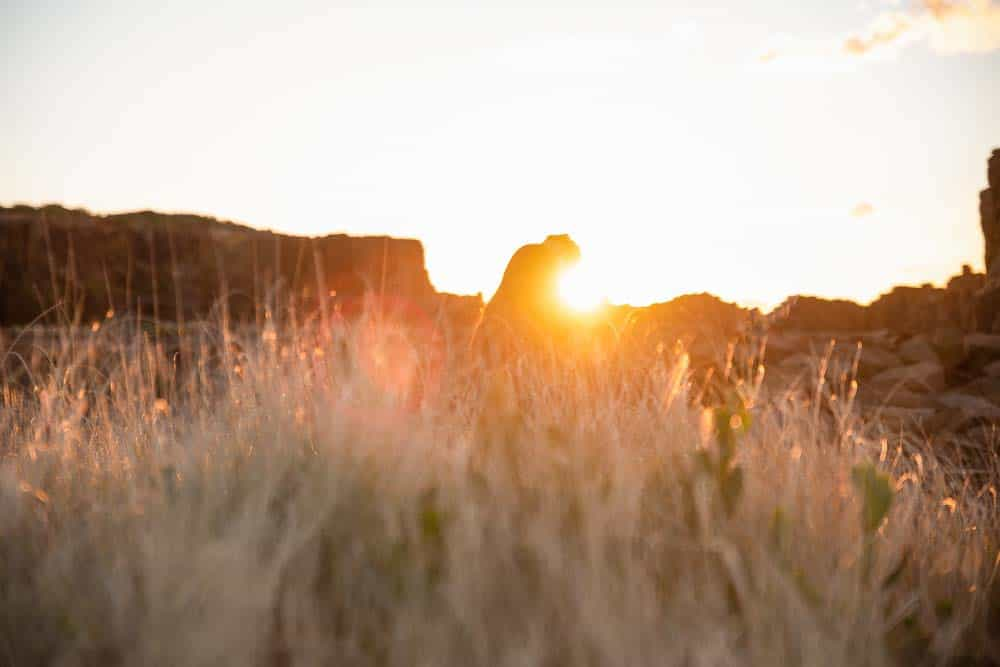 sunrise through the tall grass against bride and groom captured by james white hunter valley wedding photographer