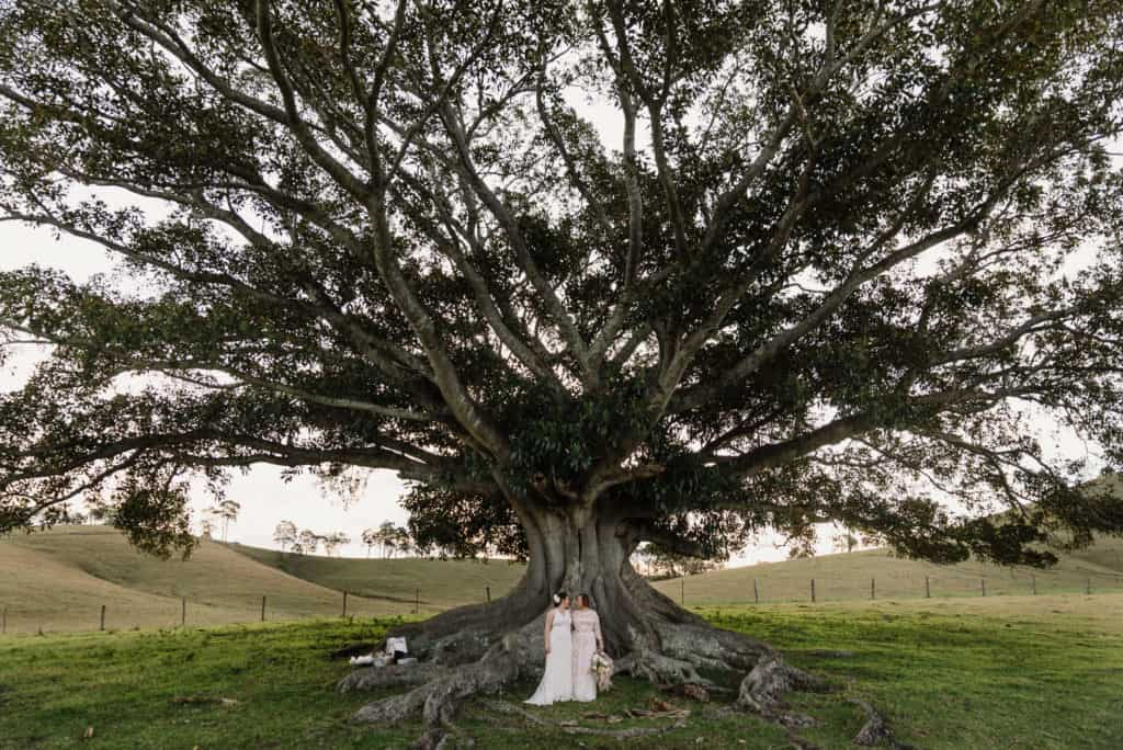 two brides stand at base of giant fig tree at Lynwood in the Hunter Valley