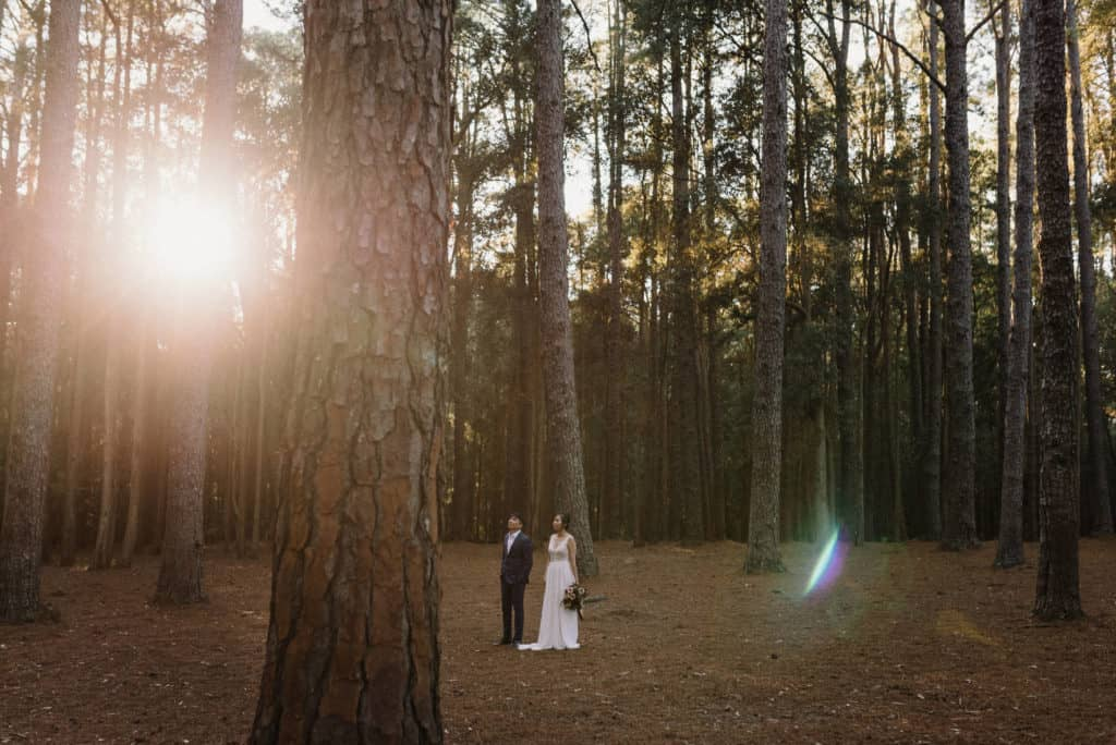 bride and groom standing in pine forest, holding hands as the sun rises