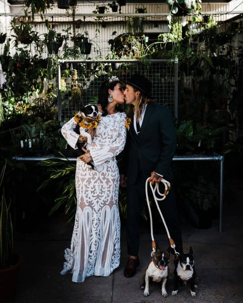 bride and groom share a kiss as they pose for photos with their dogs at a greenhouse in hunter valley